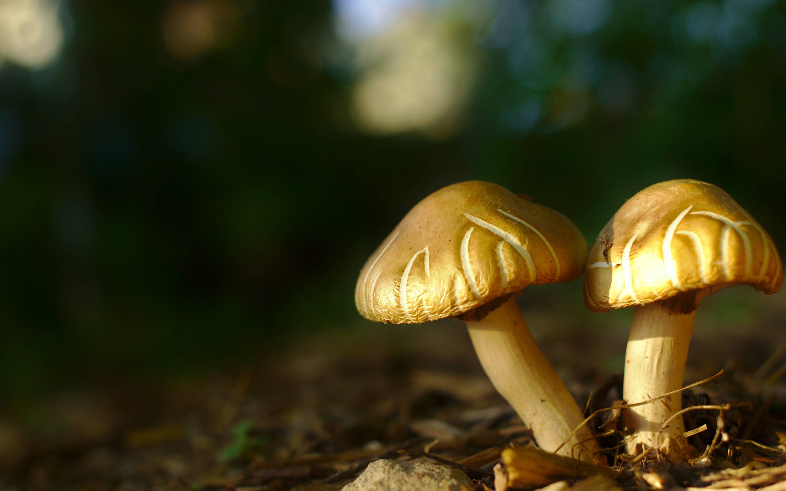 Backyard_Mushrooms_by_Kurt_Zitzelman