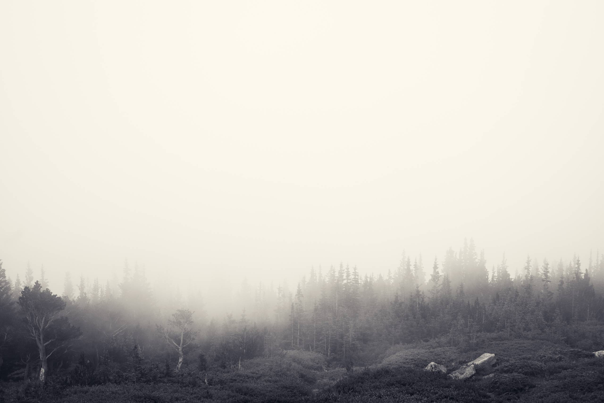 Foggy_Forest_by_Jake_Stewart